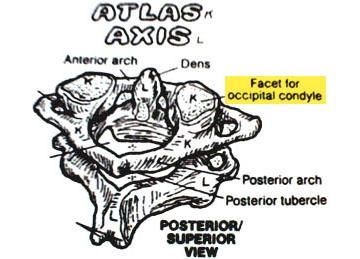 Anatomy Textbook Errors